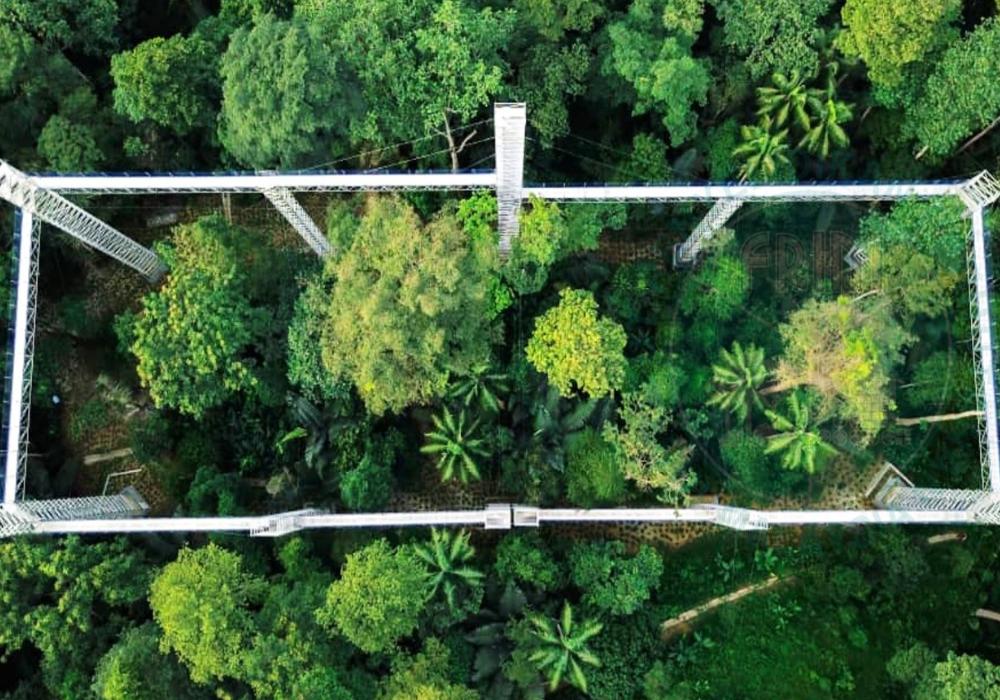 Forest skywalk Malaysia