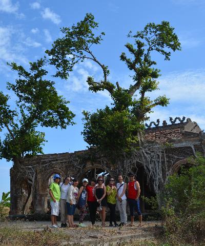 Vietnam bodhi tree