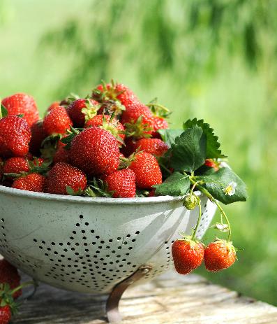 Japan – Sweet Fruits