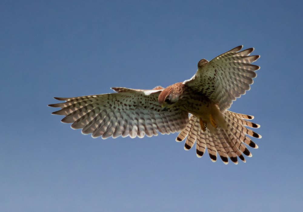 Falcons Abu Dhabi UAE