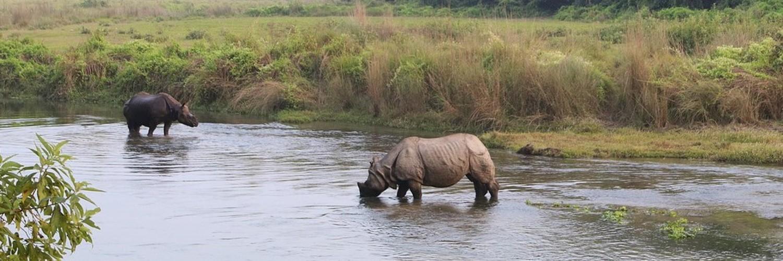 Nepal rhinos
